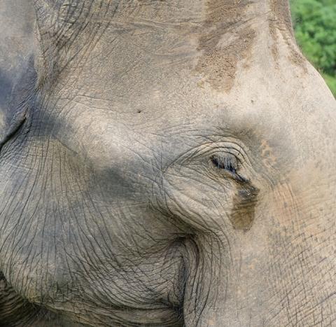 elephant_loader